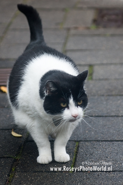 Poes 2011-2681