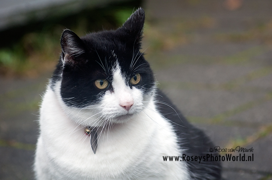 Poes 2011-2683
