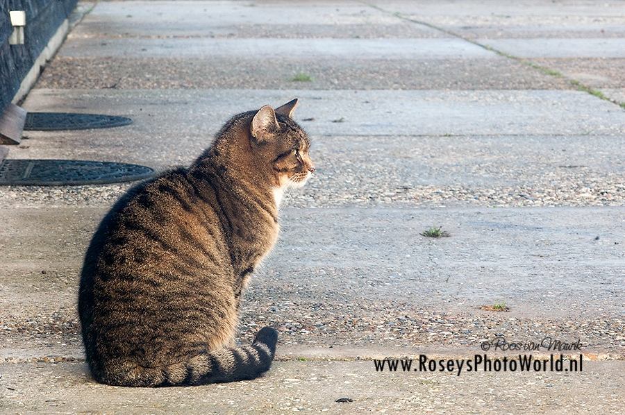 Poes 2011-3203
