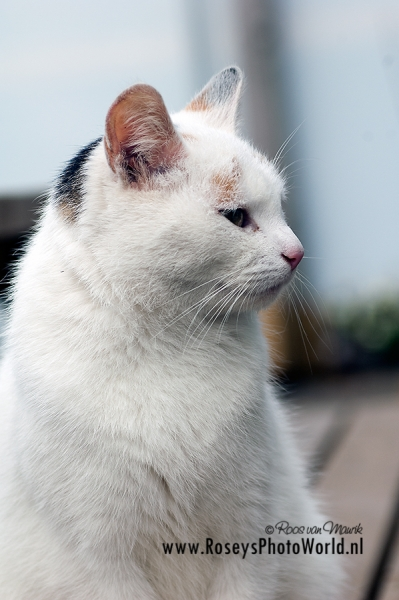 Poes 2011-5392