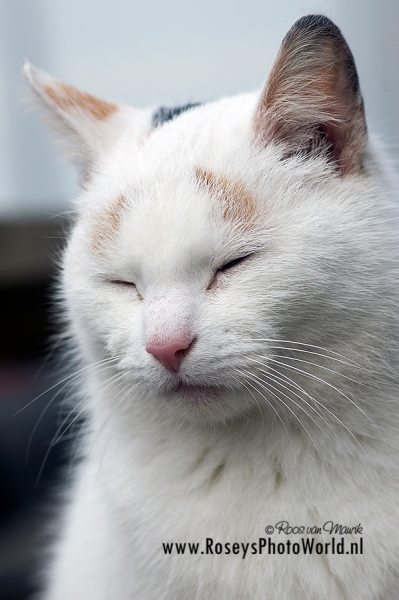 Poes 2011-5398