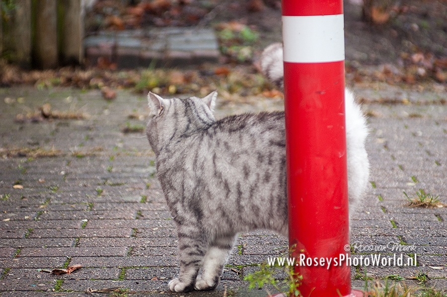 Poes 2012-3773