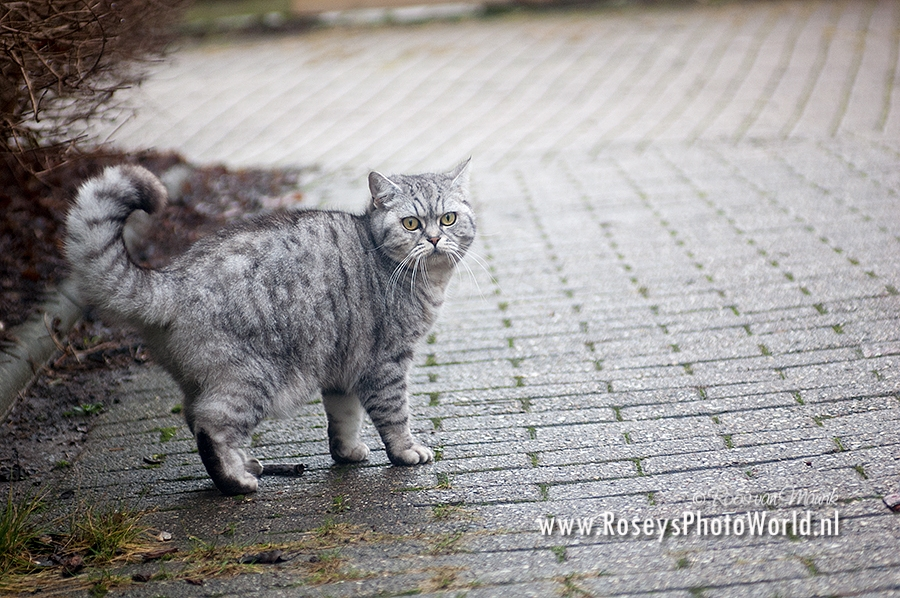 Poes 2012-3774