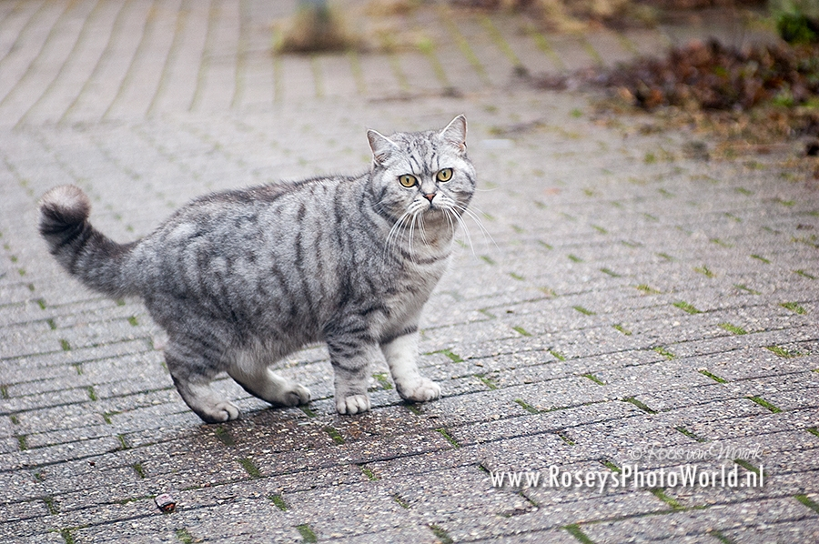 Poes 2012-3779