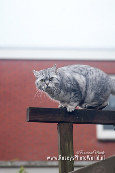Poes 2012-3782
