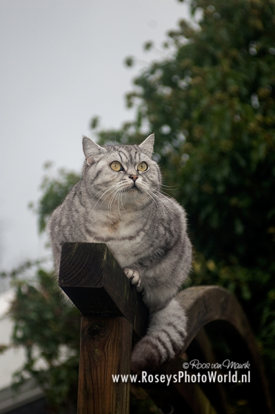 Poes 2012-3791