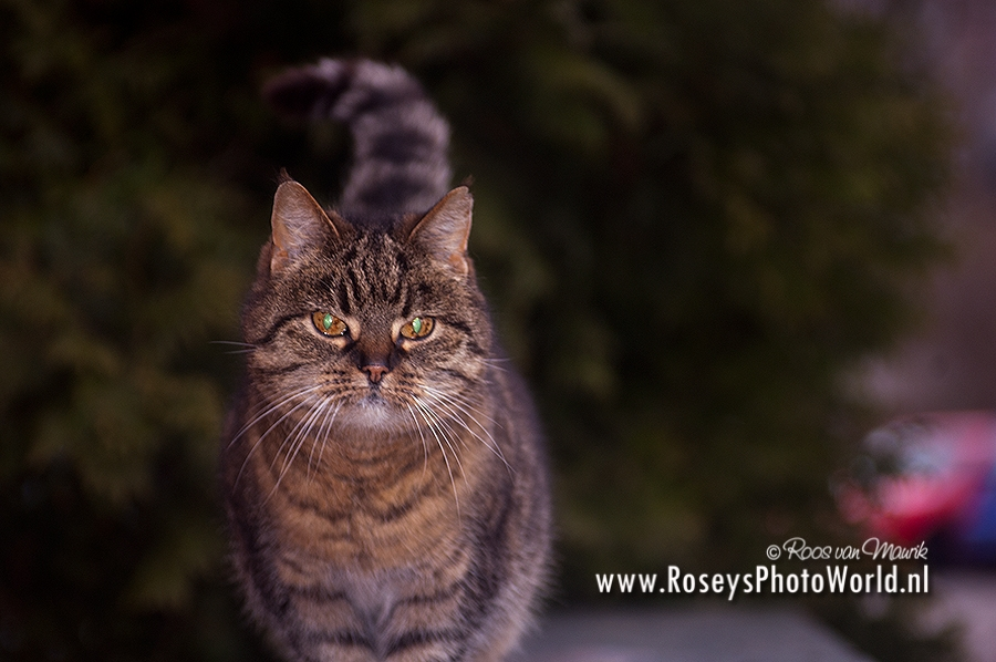 Poes 2012-3810