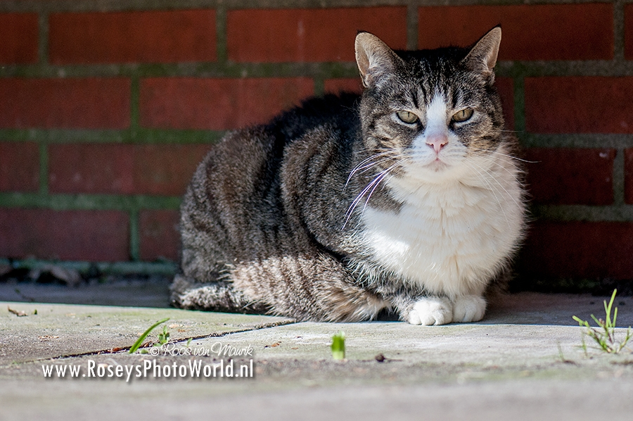 Poes 2017-0915